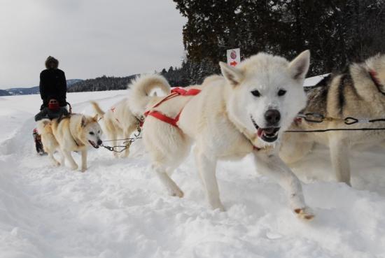 Husky sledding at Sacacomie Lodge